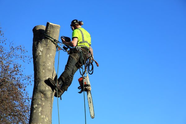 tree mender working at the height