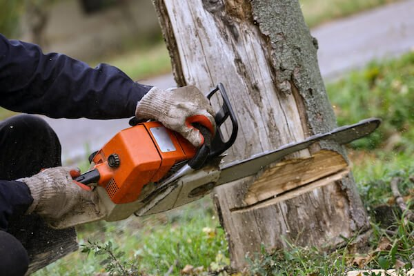 expert using a saw to cut down the tree in toronto