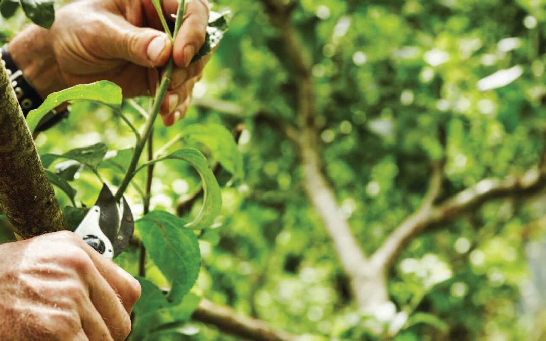 What Is Pruning? The Importance, Benefits, and Methods of Pruning