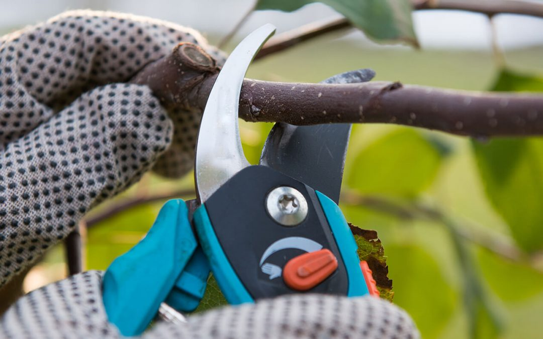 When is the best time to prune trees?