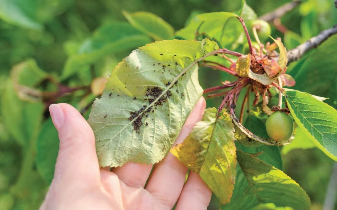6 Common Tree Diseases in Toronto